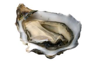 หอยนามรม