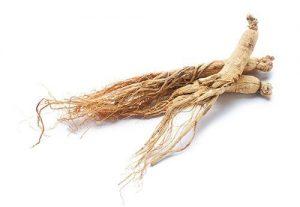 โสม (Ginseng Extract)