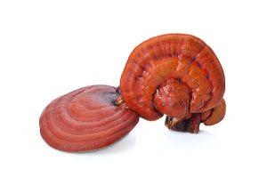 เห็ดหลินจือ (Ganoderma Lucidum)